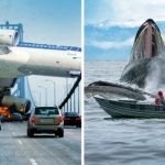 The 20 Most Perfectly Timed Photos You Will Ever See