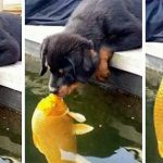 Story Behind This Dog And Goldfish Has Taken The World By Storm (8 Pics)